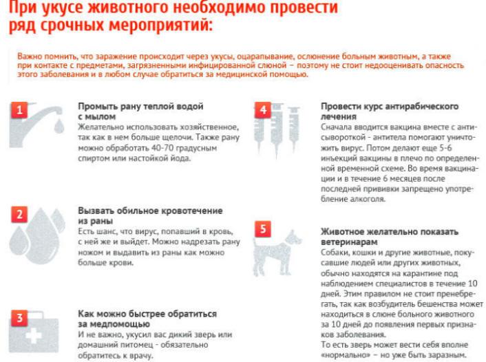 Схема профилактических прививок при бешенстве